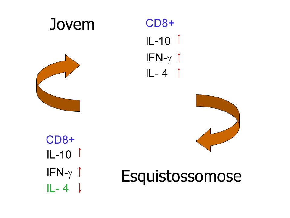 Jovem CD8+ IL-10 IFN-g IL- 4 CD8+ IFN-g IL- 4 IL-10 Esquistossomose
