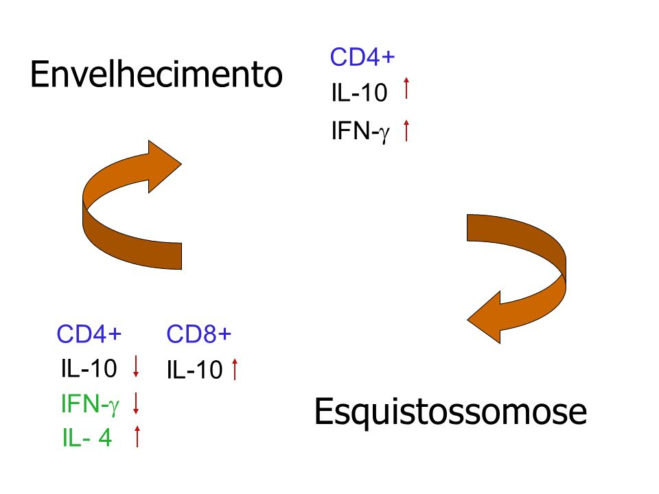 Envelhecimento Esquistossomose CD4+ IL-10 IFN-g CD4+ CD8+ IL-10 IL- 4