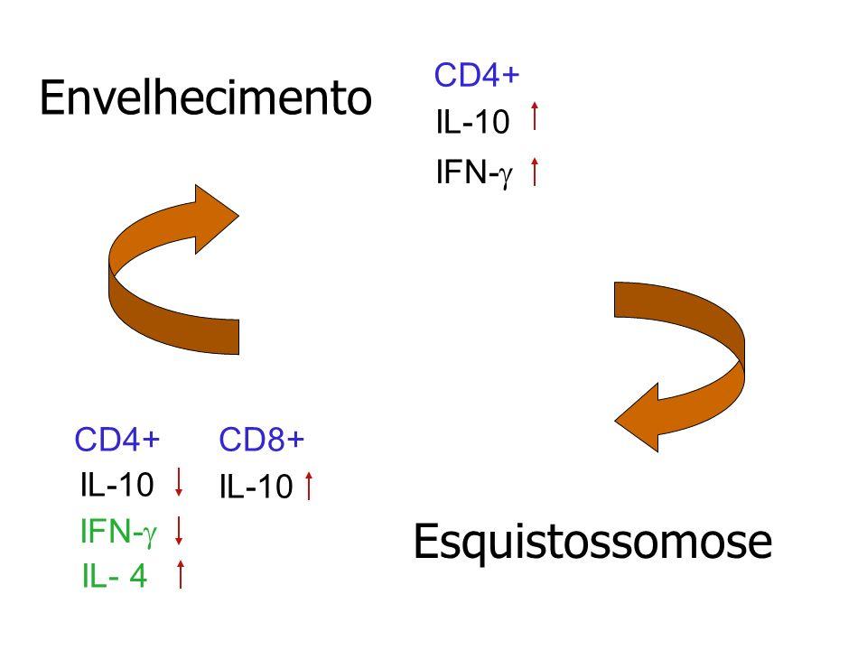 Envelhecimento Esquistossomose CD4+ IL-10 IFN-g CD4+ CD8+ IL-10 IL- 4