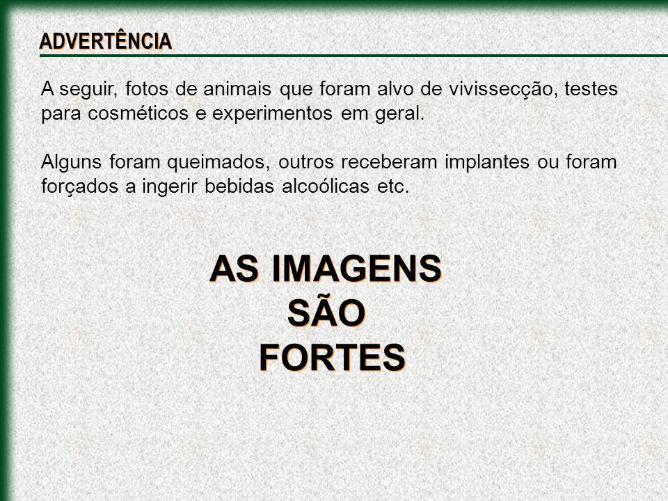 AS IMAGENS SÃO FORTES ADVERTÊNCIA