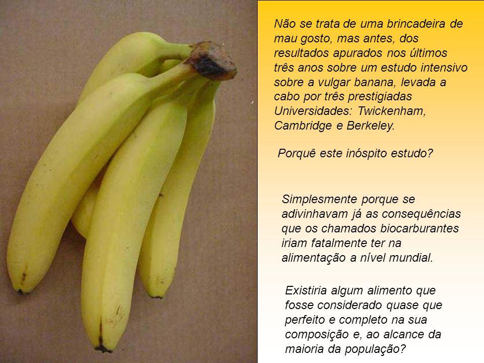 Não se trata de uma brincadeira de mau gosto, mas antes, dos resultados apurados nos últimos três anos sobre um estudo intensivo sobre a vulgar banana, levada a cabo por três prestigiadas Universidades: Twickenham, Cambridge e Berkeley.