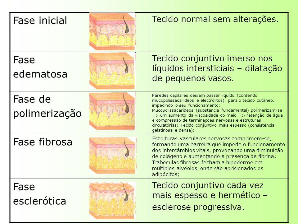 Fase inicial Fase edematosa Fase de polimerização Fase fibrosa