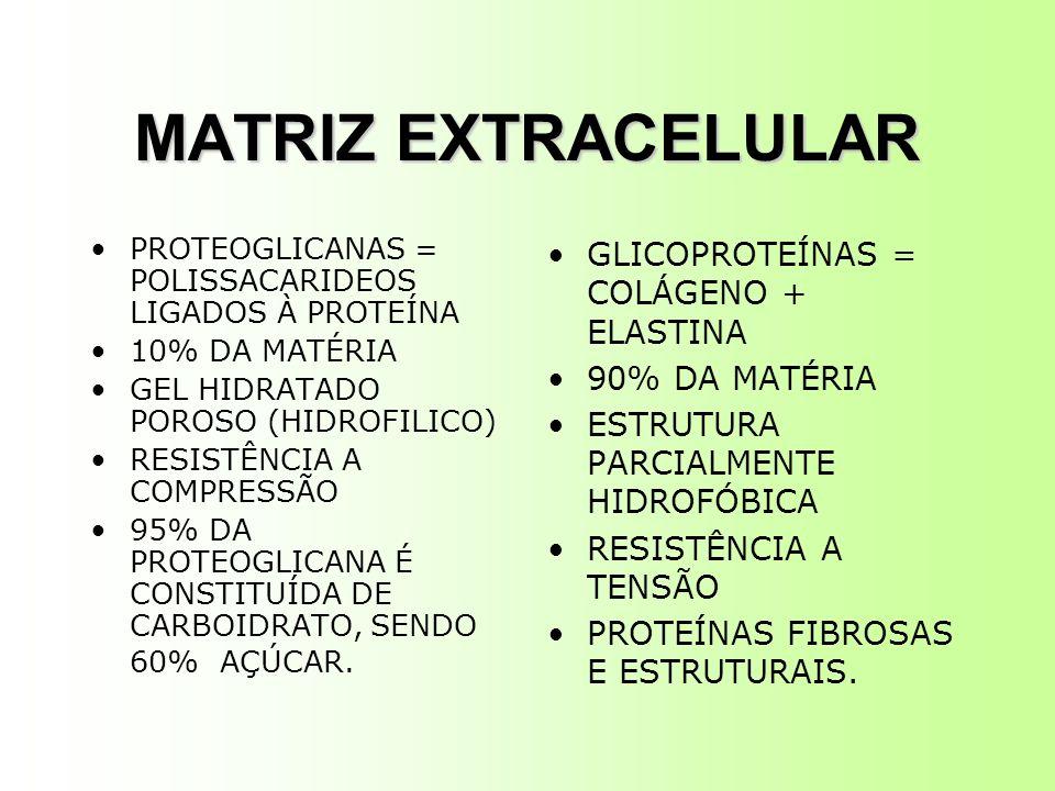 MATRIZ EXTRACELULAR GLICOPROTEÍNAS = COLÁGENO + ELASTINA