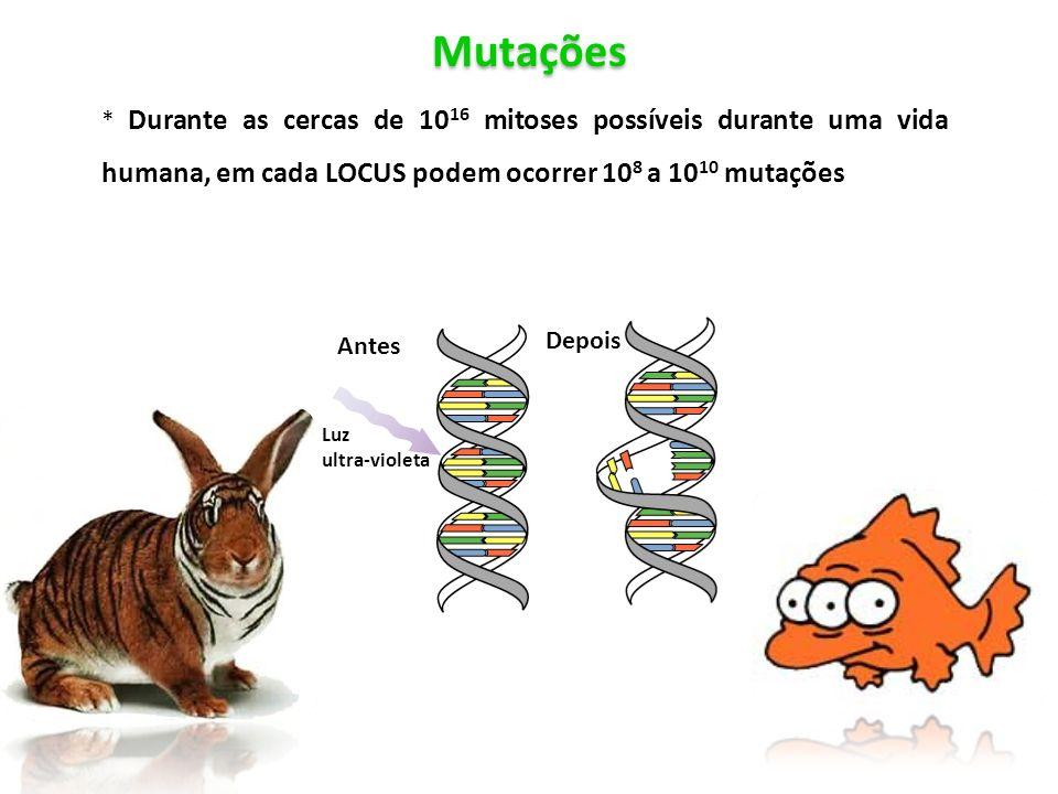 Antes Mutações. * Durante as cercas de 1016 mitoses possíveis durante uma vida humana, em cada LOCUS podem ocorrer 108 a 1010 mutações.