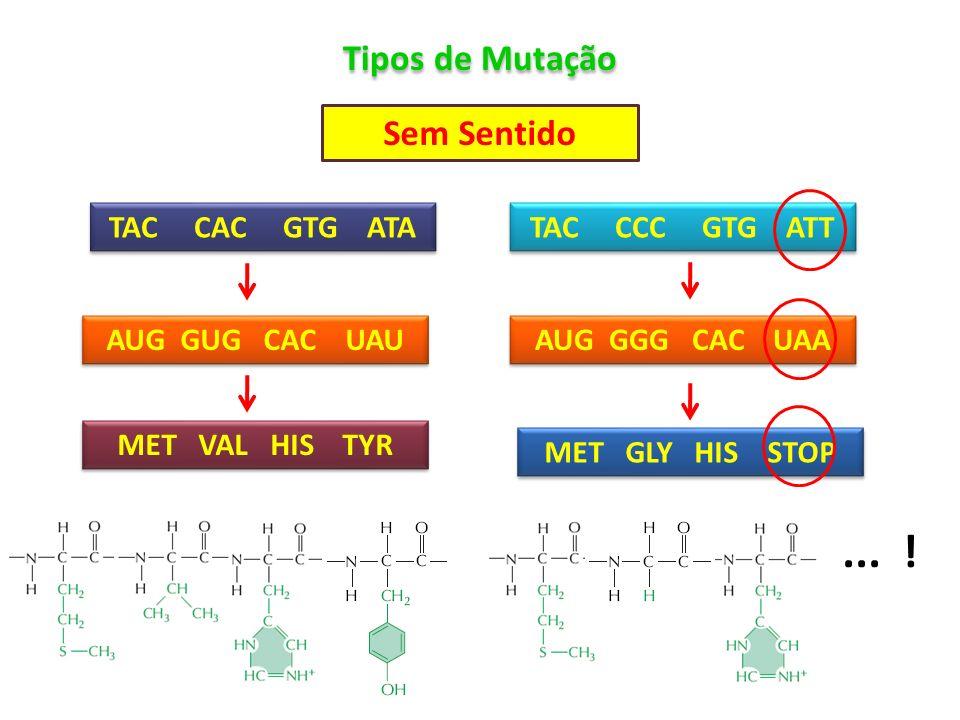 ... ! Tipos de Mutação Sem Sentido TAC CAC GTG ATA TAC CCC GTG ATT