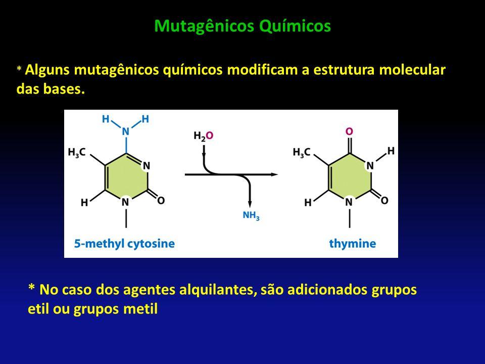 Mutagênicos Químicos * Alguns mutagênicos químicos modificam a estrutura molecular das bases.