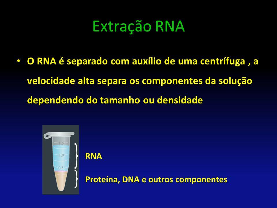 Extração RNA O RNA é separado com auxílio de uma centrífuga , a velocidade alta separa os componentes da solução dependendo do tamanho ou densidade.