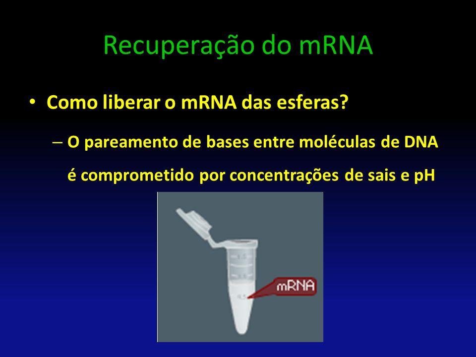Recuperação do mRNA Como liberar o mRNA das esferas
