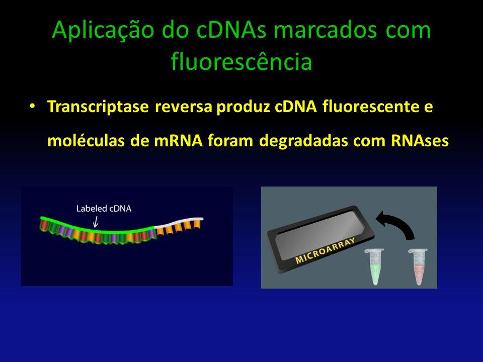 Aplicação do cDNAs marcados com fluorescência