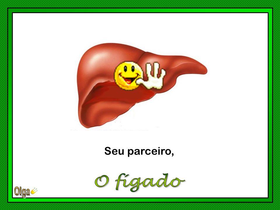 Seu parceiro, O fígado