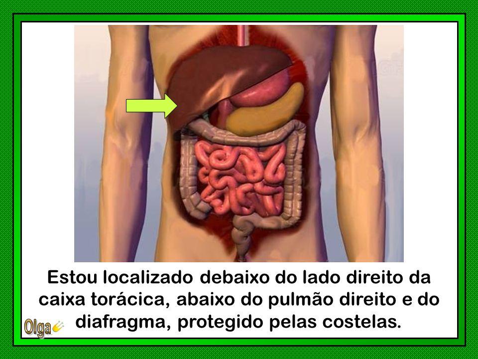 Estou localizado debaixo do lado direito da caixa torácica, abaixo do pulmão direito e do diafragma, protegido pelas costelas.