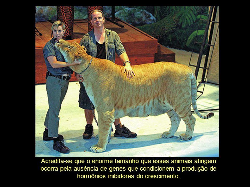 Acredita-se que o enorme tamanho que esses animais atingem