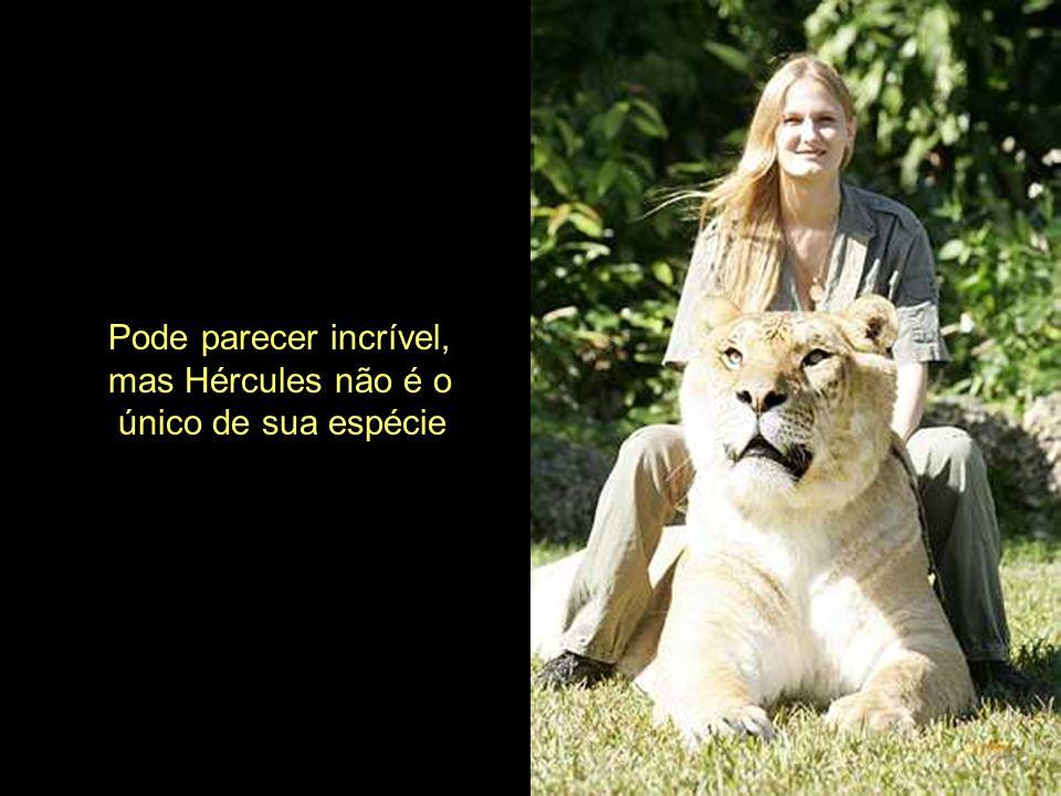 Pode parecer incrível, mas Hércules não é o único de sua espécie