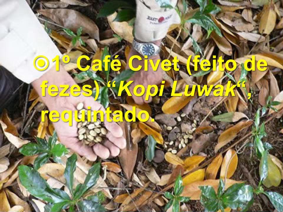 1º Café Civet (feito de fezes) Kopi Luwak , requintado.
