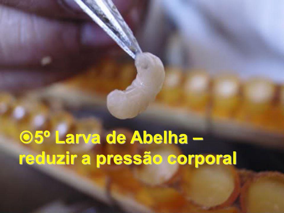 5º Larva de Abelha – reduzir a pressão corporal