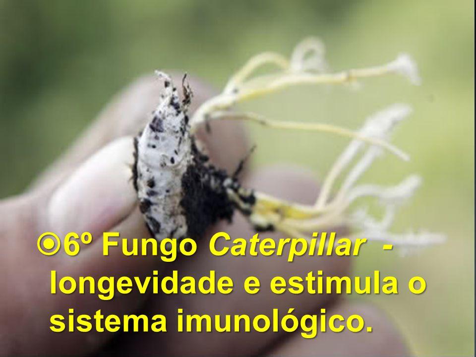 6º Fungo Caterpillar - longevidade e estimula o sistema imunológico.
