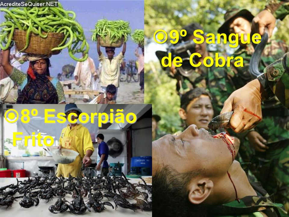 9º Sangue de Cobra 8º Escorpião Frito