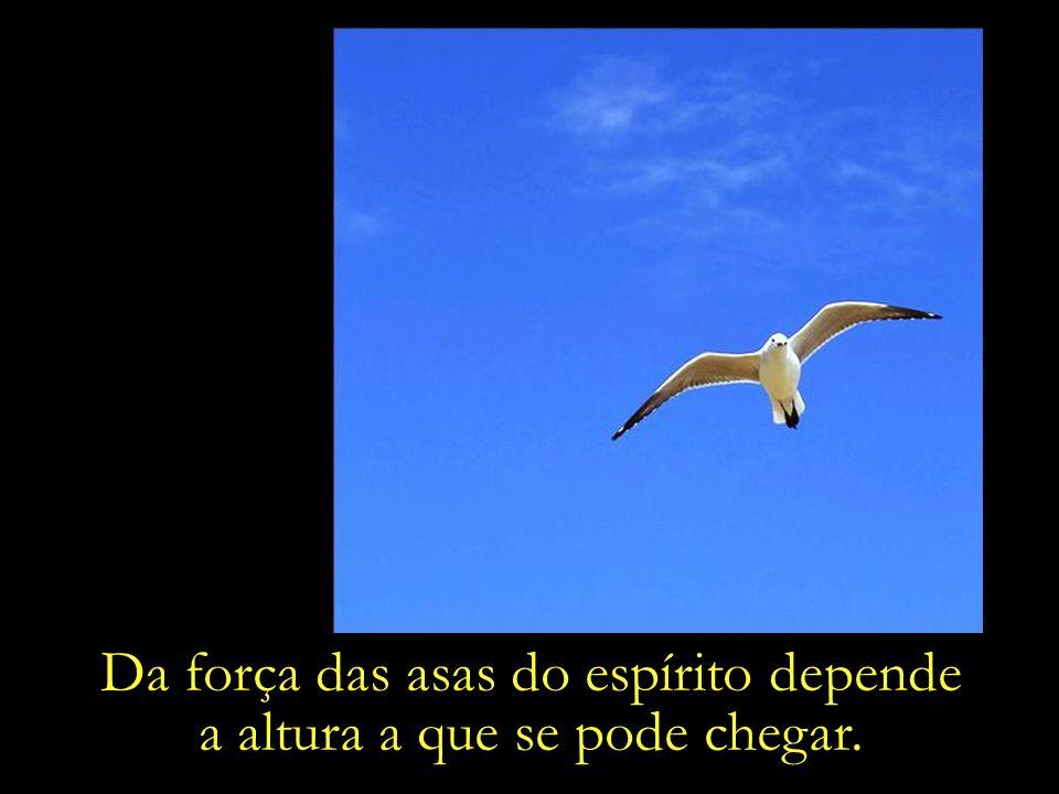 Da força das asas do espírito depende a altura a que se pode chegar.