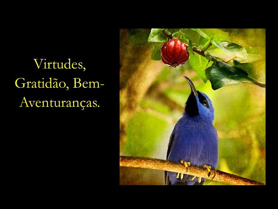 Virtudes, Gratidão, Bem- Aventuranças.