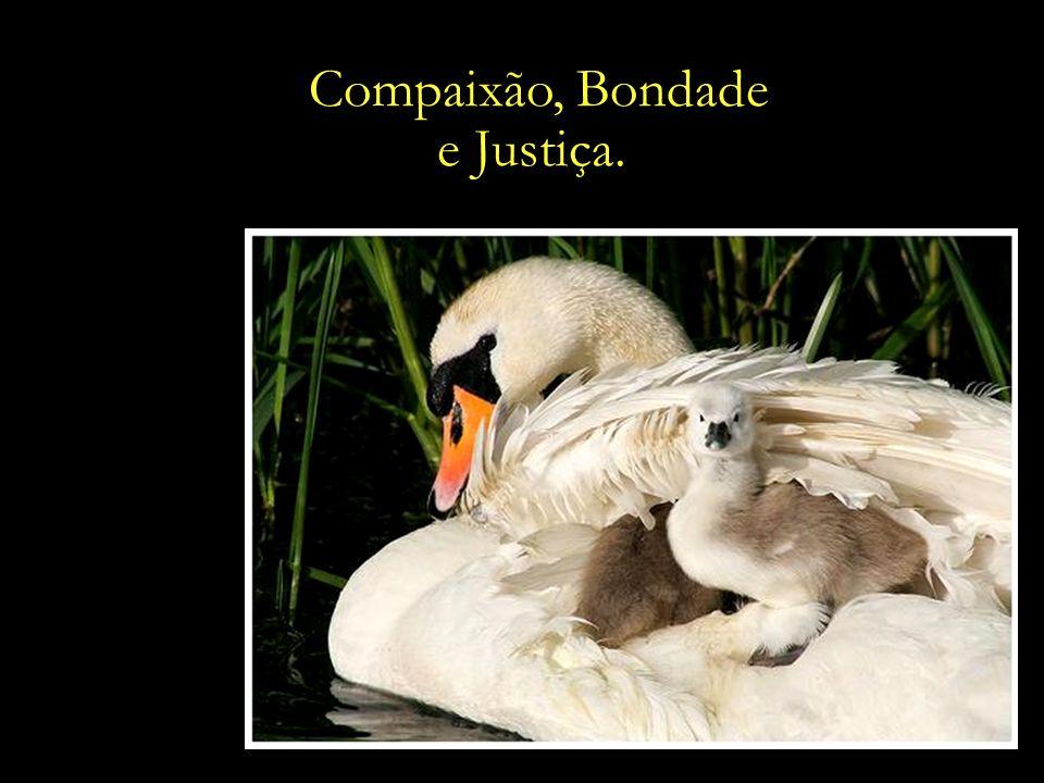 Compaixão, Bondade e Justiça.
