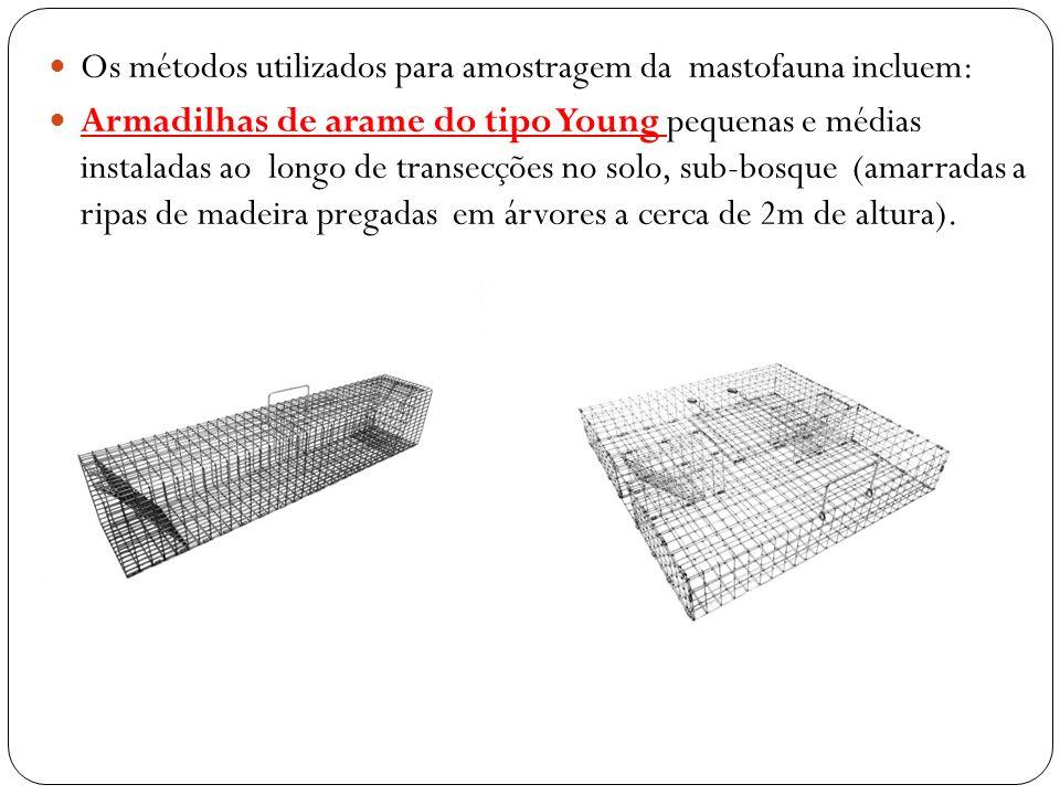 Os métodos utilizados para amostragem da mastofauna incluem: