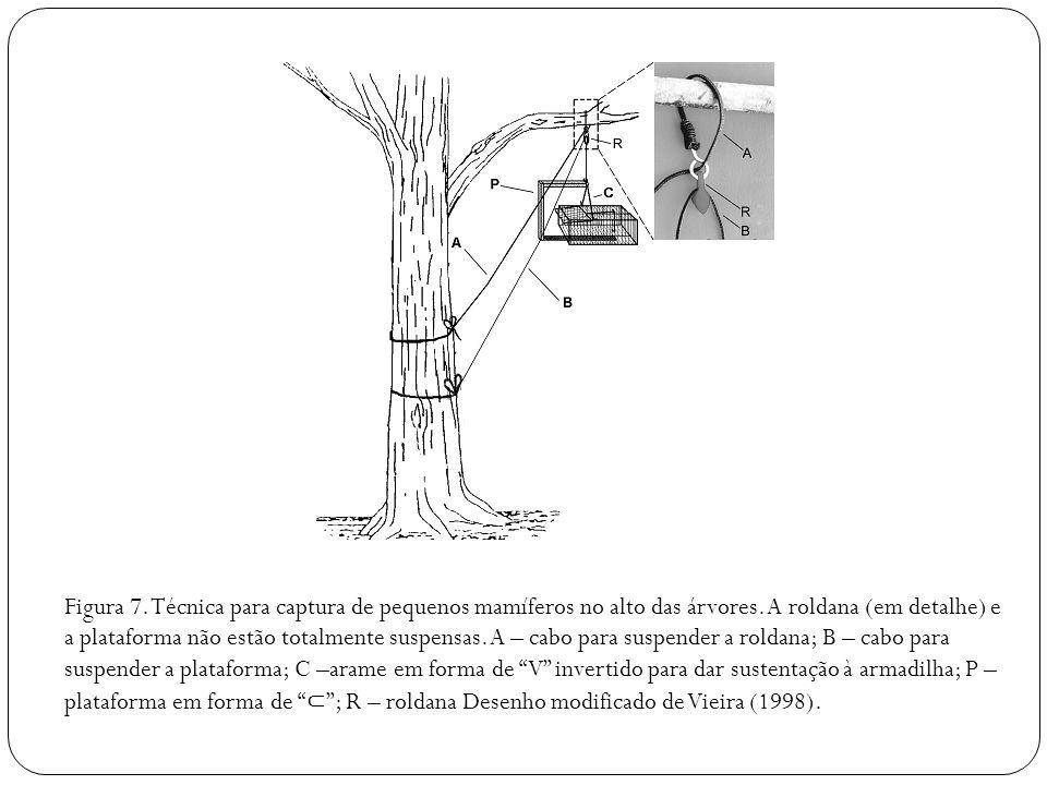 Figura 7. Técnica para captura de pequenos mamíferos no alto das árvores.