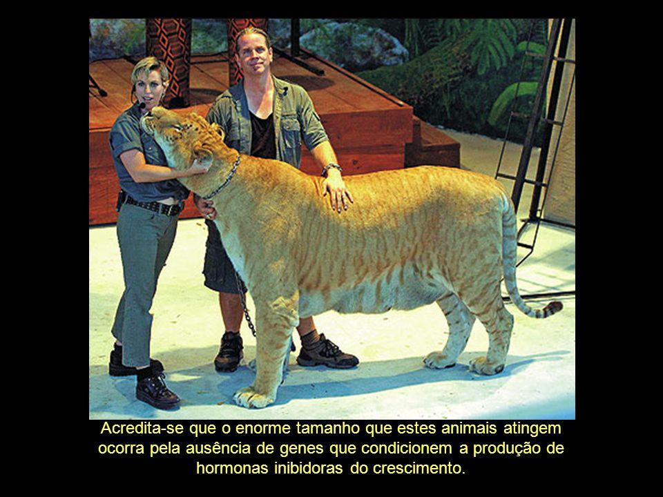 Acredita-se que o enorme tamanho que estes animais atingem
