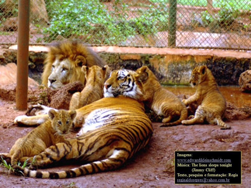 Imagens: www.edwardjkleinschmidt.com. Música: The lions sleeps tonight. (Jimmy Cliff) Texto, pesquisa e formatação: Regis.