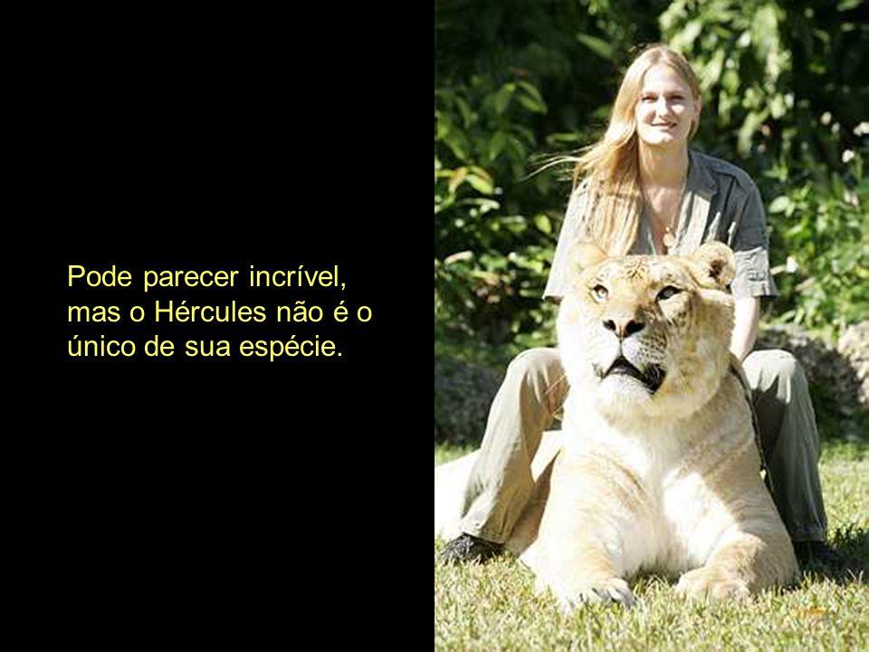 Pode parecer incrível, mas o Hércules não é o único de sua espécie.