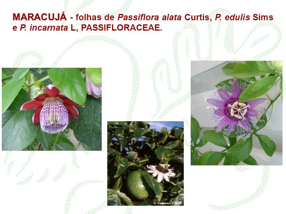 MARACUJÁ - folhas de Passiflora alata Curtis, P. edulis Sims e P