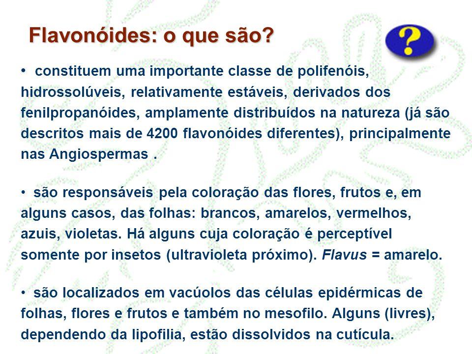 Flavonóides: o que são
