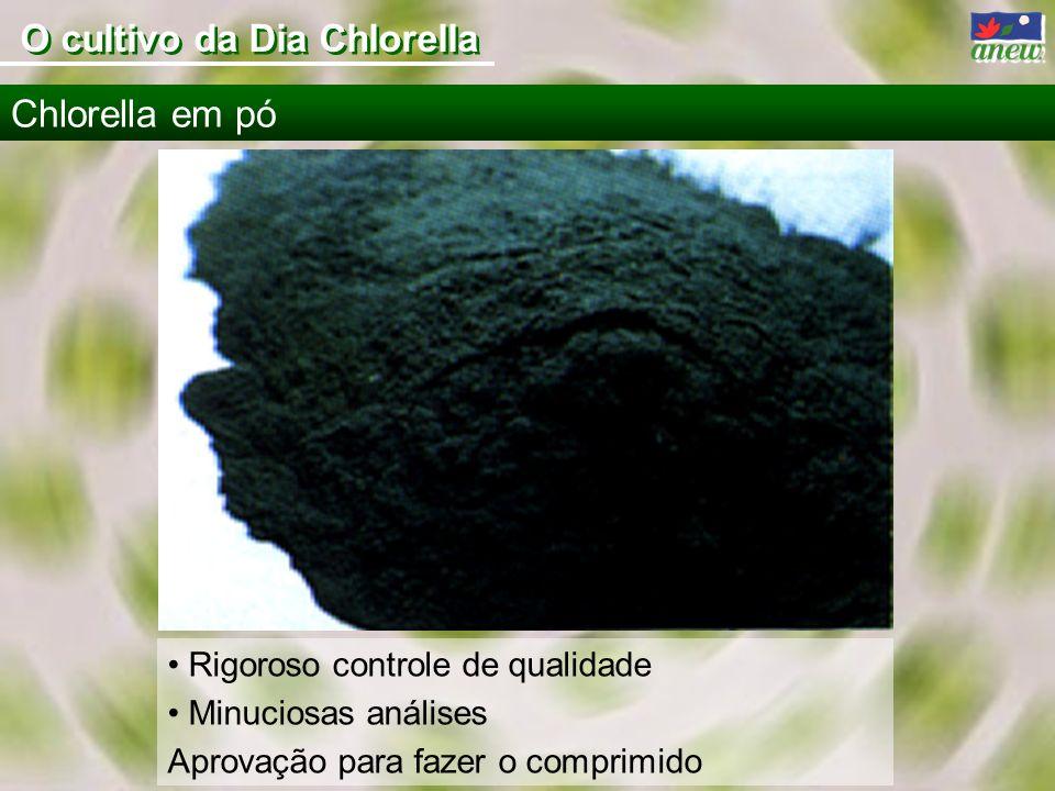 O cultivo da Dia Chlorella