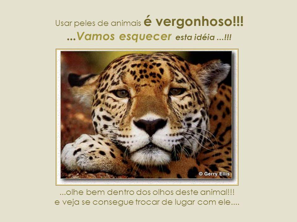 Usar peles de animais é vergonhoso!!! ...Vamos esquecer esta idéia ...!!!