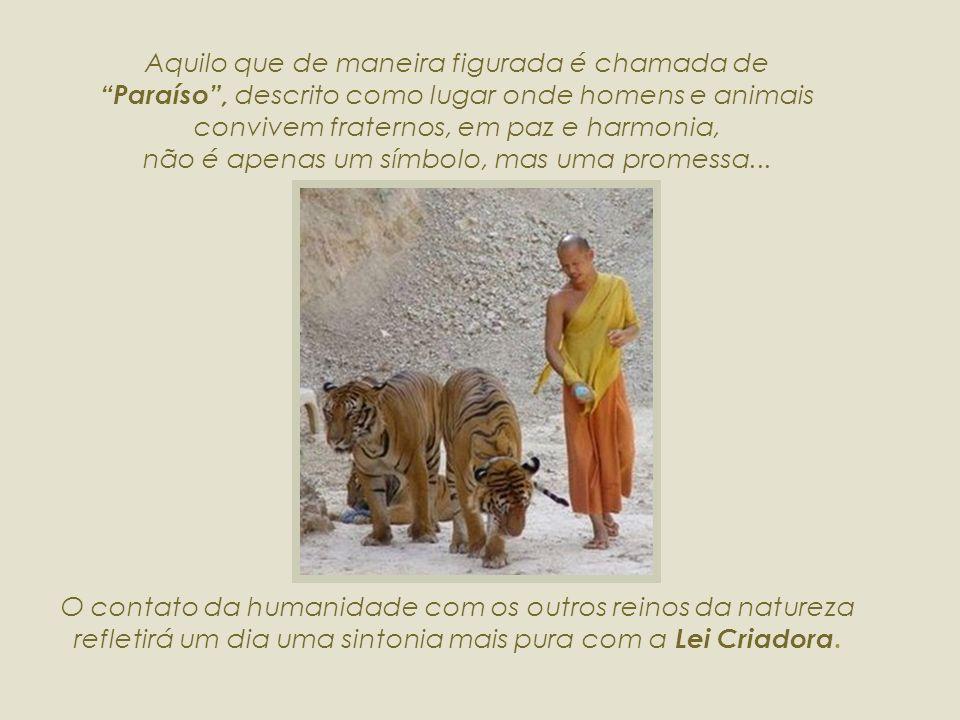 Aquilo que de maneira figurada é chamada de Paraíso , descrito como lugar onde homens e animais convivem fraternos, em paz e harmonia, não é apenas um símbolo, mas uma promessa...