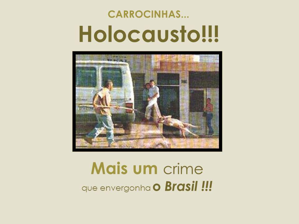 CARROCINHAS... Holocausto!!!