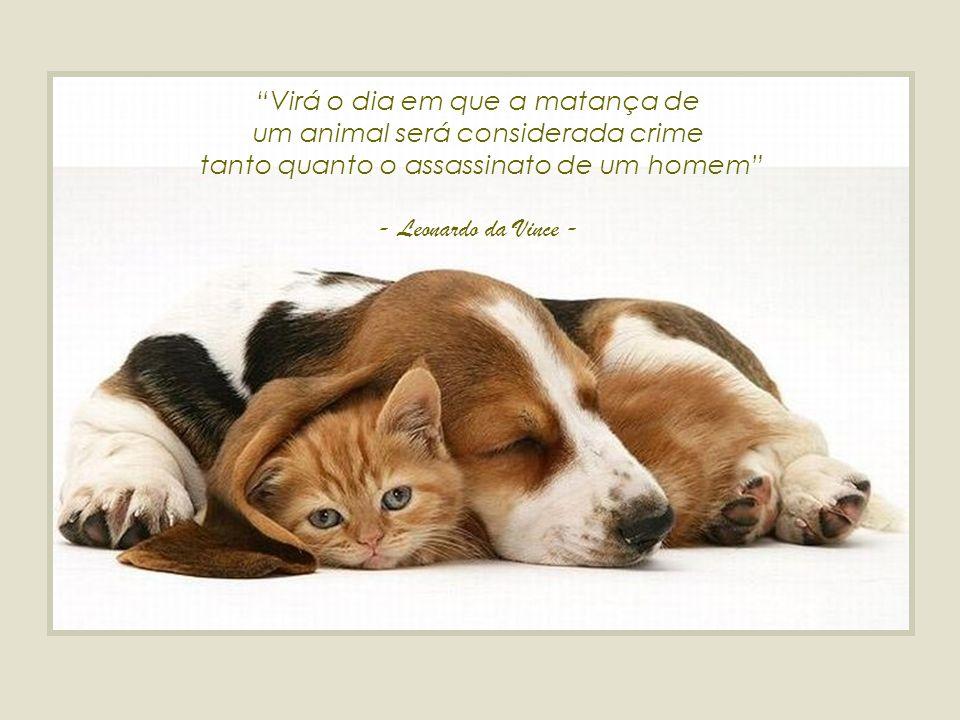 Virá o dia em que a matança de um animal será considerada crime tanto quanto o assassinato de um homem - Leonardo da Vince -