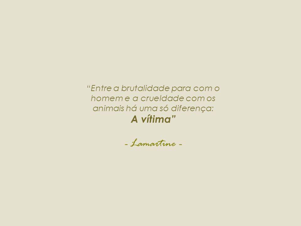 Entre a brutalidade para com o homem e a crueldade com os animais há uma só diferença: