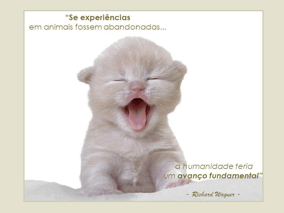 Se experiências em animais fossem abandonadas...