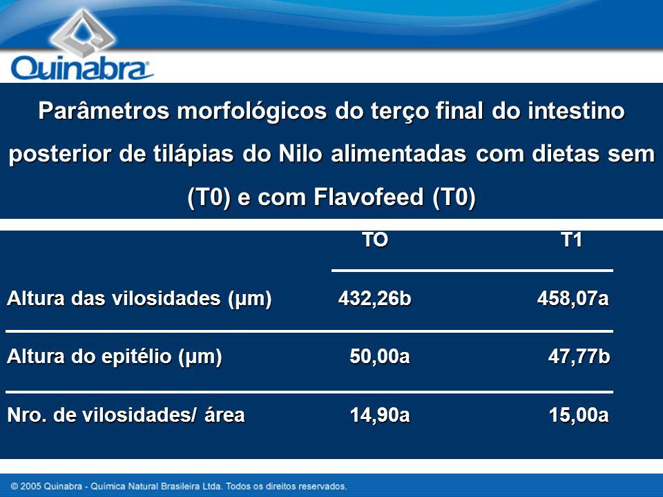 Parâmetros morfológicos do terço final do intestino posterior de tilápias do Nilo alimentadas com dietas sem (T0) e com Flavofeed (T0)