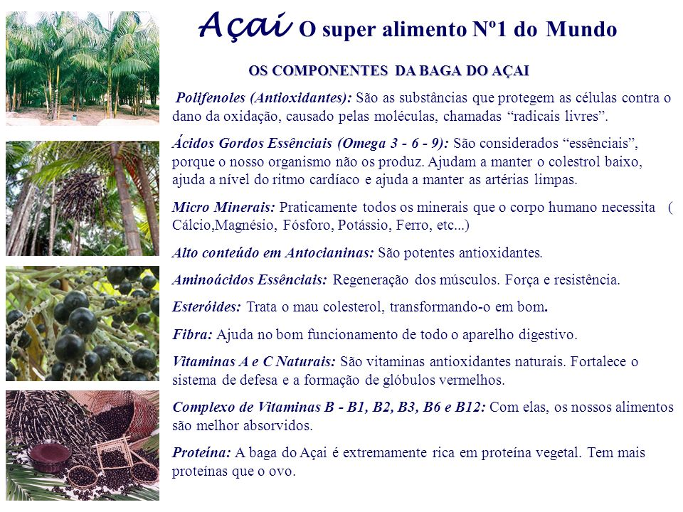 Açai O super alimento Nº1 do Mundo