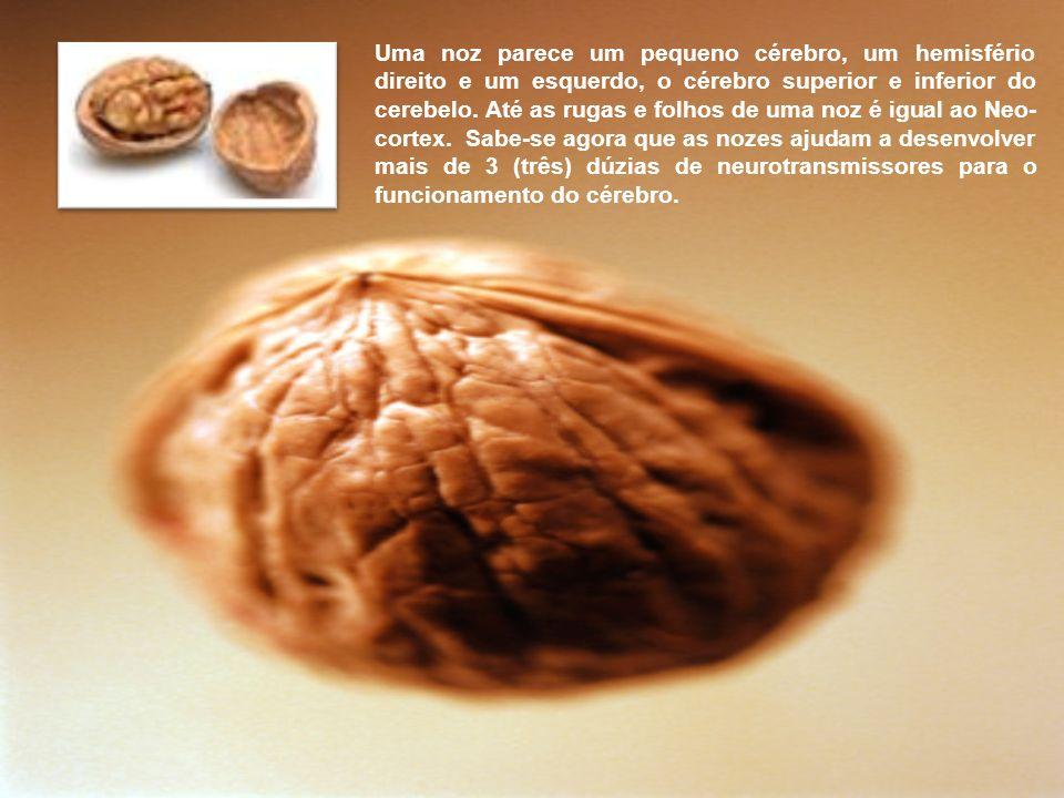 Uma noz parece um pequeno cérebro, um hemisfério direito e um esquerdo, o cérebro superior e inferior do cerebelo.