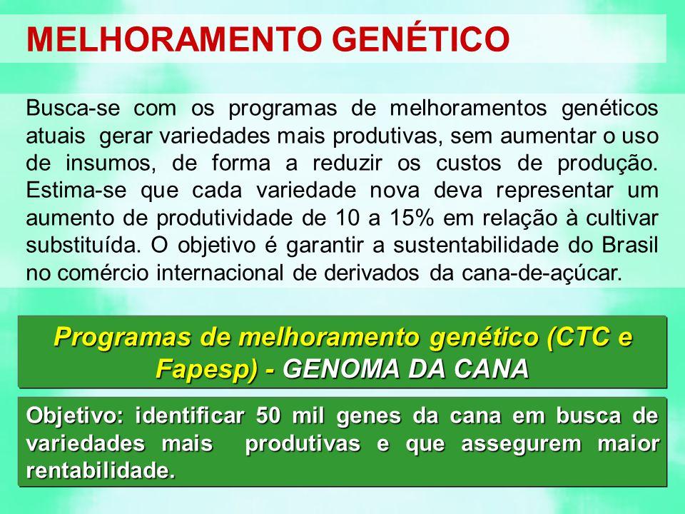Programas de melhoramento genético (CTC e Fapesp) - GENOMA DA CANA