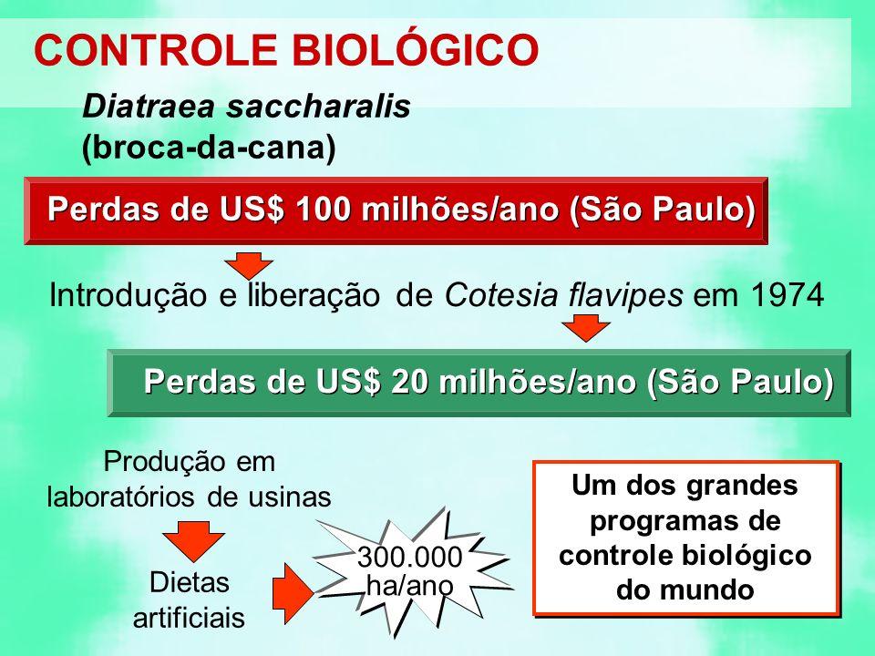 Um dos grandes programas de controle biológico do mundo