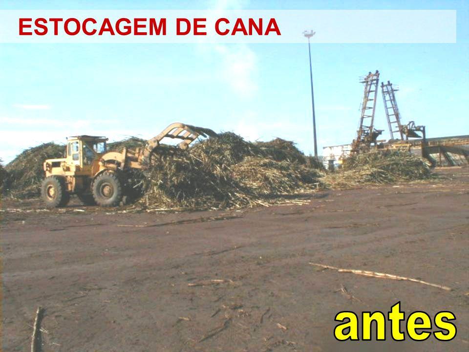 ESTOCAGEM DE CANA antes