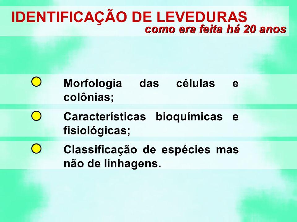 IDENTIFICAÇÃO DE LEVEDURAS
