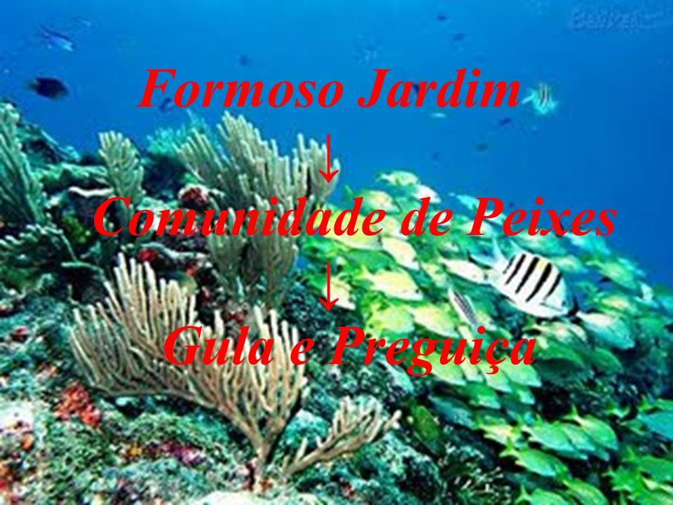 Formoso Jardim ↓ Comunidade de Peixes Gula e Preguiça