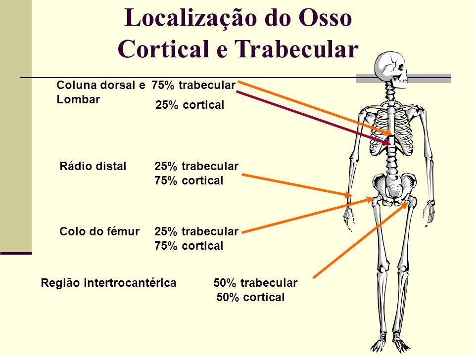 Localização do Osso Cortical e Trabecular