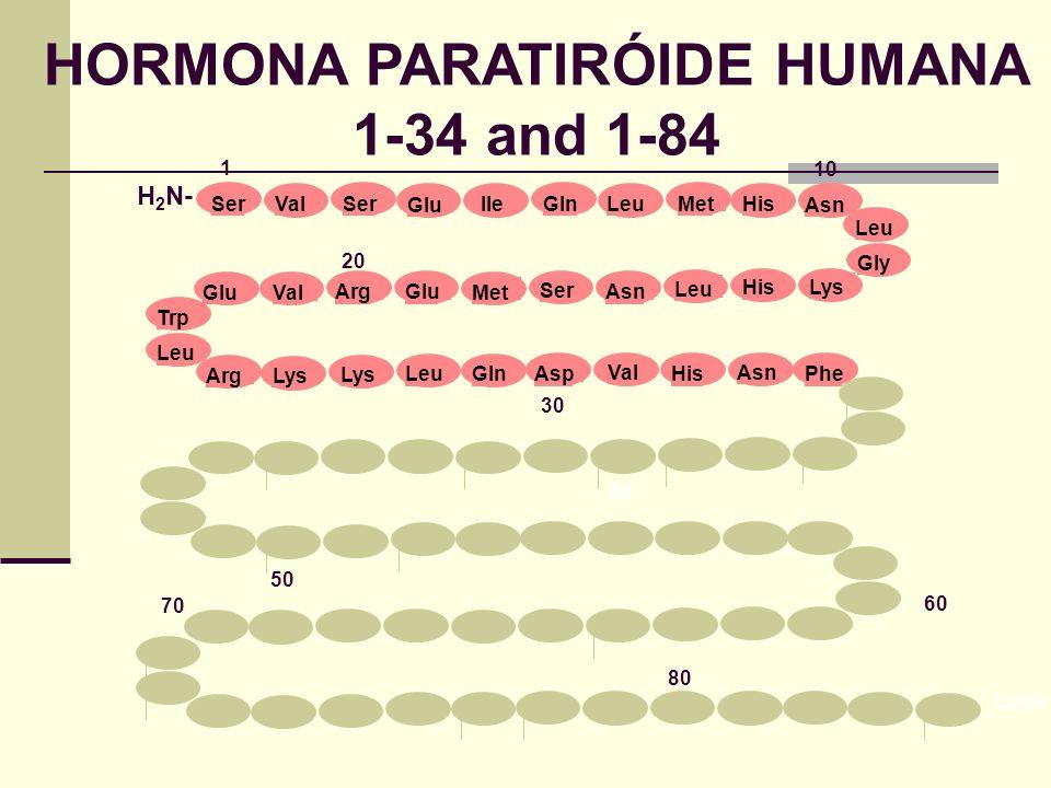 HORMONA PARATIRÓIDE HUMANA