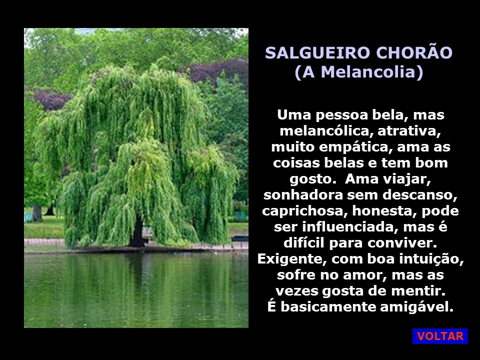 SALGUEIRO CHORÃO (A Melancolia)