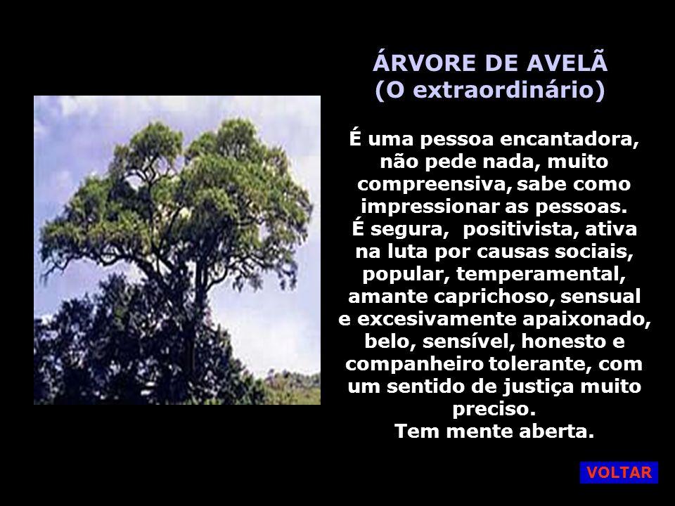ÁRVORE DE AVELÃ (O extraordinário)